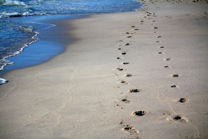 Two-sets-of-footprints-along-the-shore-300x200